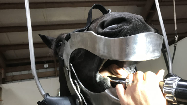 Floating horse's teeth with power drill