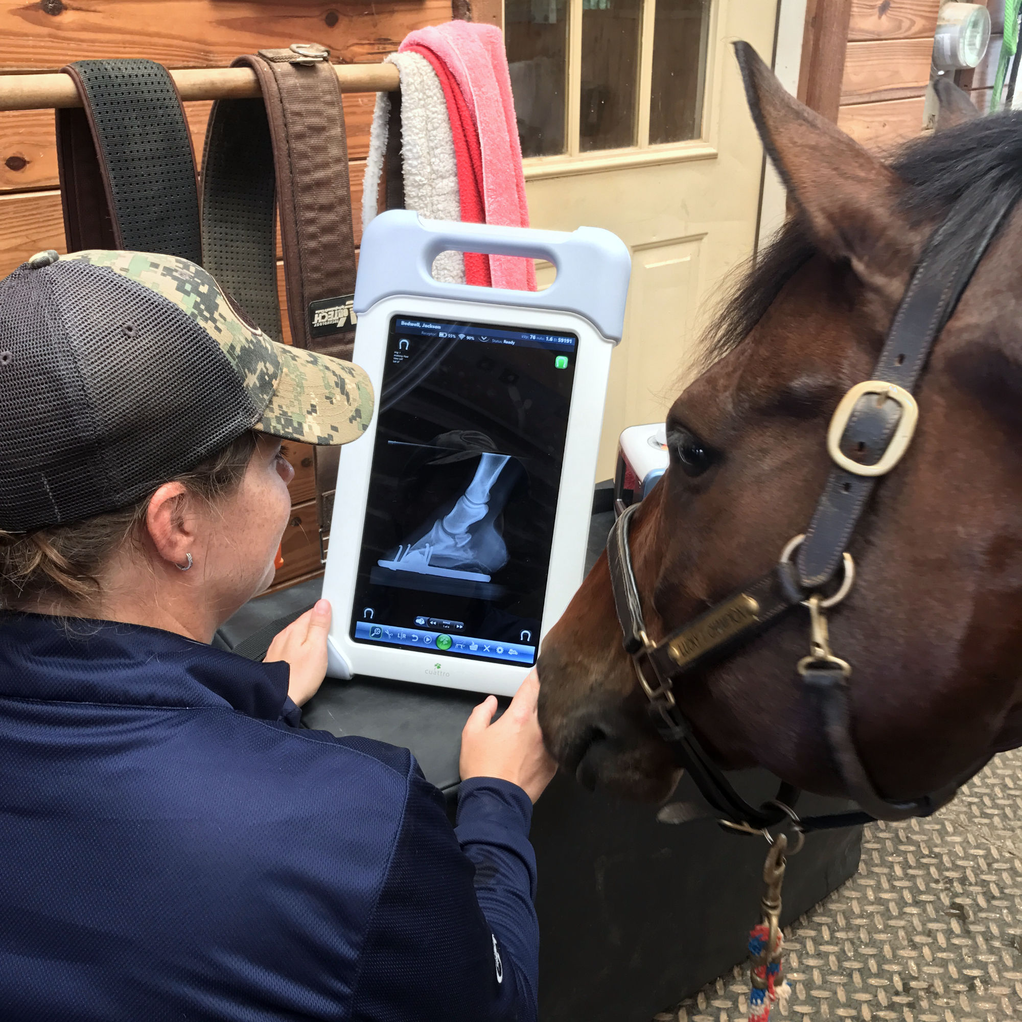 East West Veterinary doctors review x-rays with clients