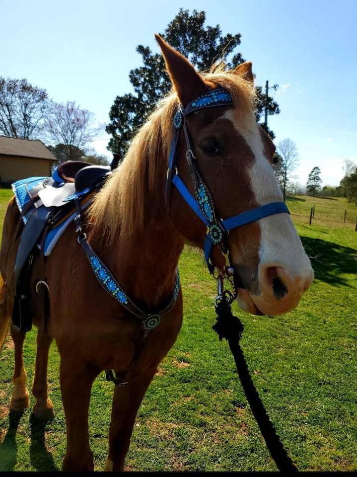 east-west-veterinary-equine-clients-002