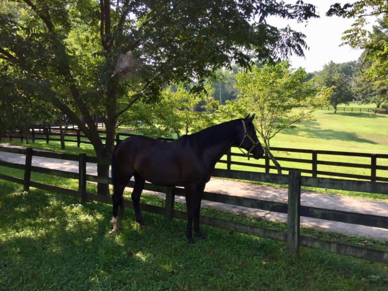 east-west-veterinary-equine-clients-006