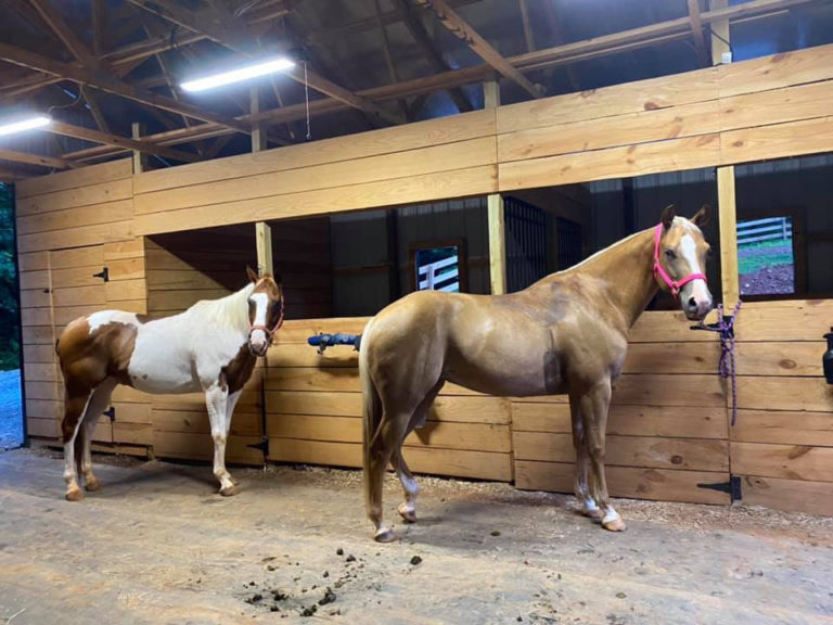 east-west-veterinary-equine-clients-007