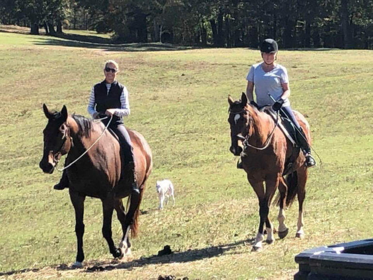 east-west-veterinary-equine-clients-018
