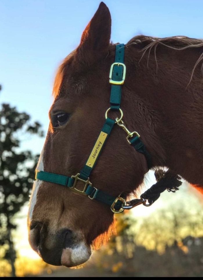 east-west-veterinary-equine-clients-019